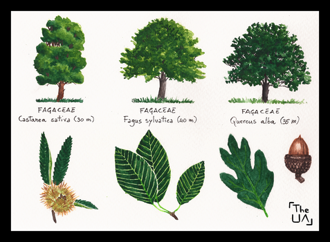 Tree Study - Broad Leaved 8 by TheUnconfidentArtist