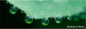 Waterdrops by CecilyAndreuArtwork