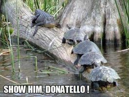 Show Him Donatello by Dania-Audax