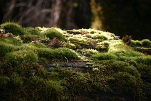 Moss stock 6 by rustymermaid-stock