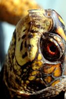turtle. by lovers-need-lawyers