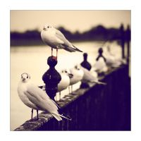 Eight Seagulls. by feudal89