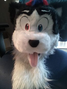 Selling Harvey Husky Head as a Fixer Upper! by unknown0species
