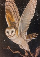 ACEO: Reach for the Stars by DanielleMWilliams