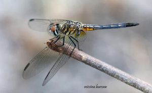 Dragonfly 2008-05 by Aries18o18