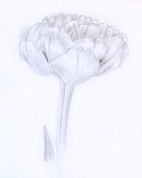 A tulip drawing by Weirda208