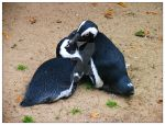 penguins by nagham