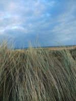 dune grass by Blue-eyed-Kelpie