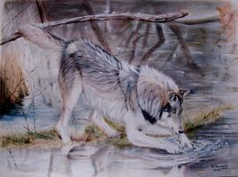 Wolf in the swamp. by HendrikHermans
