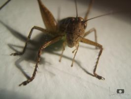 grasshopper 2 by ExExic