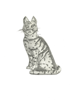 Gray Tabby Cat by Shimmerstripe