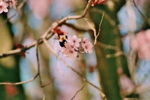 Bee in the Tree by zeldalilly