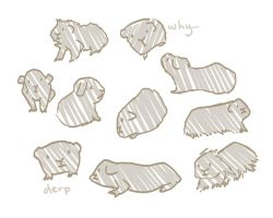 Guinea Pigs by naiveplant