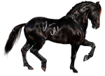 Friesian horse WIP by 88Laura88