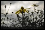 field of flowers before the storm by ChiaviDiNotti