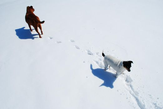 Daisy and Lizzie in the snow by BuffaloHeadroom