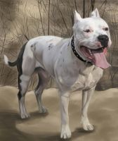 American Staffordshire Terrier by Neshmet