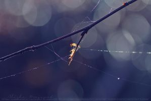 Spiderweb, pt II. by Ravenith