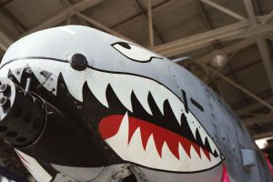 A-10 Nose Art by dt9164