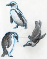 Penguin Sketches by justsomedude86