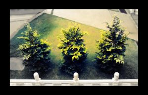 3 trees by think0