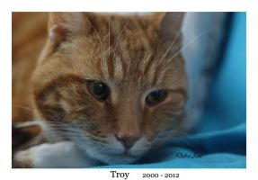 R.I.P Troy by Deb-e-ann