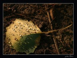 autumn jewel 2 by 77photons