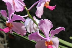 orchids by michaeljc6