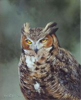 Great Horned Owl by Blackjaxe