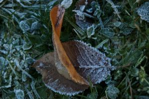 Cold and frosty morning pt 2 by SupersonicA