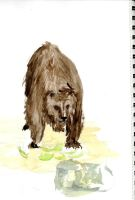 Bear quick watercolour by Counterdraw