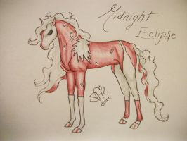 Midnight Eclipse - REF by Horsewhisperer5
