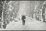 snowy alley by veftenie