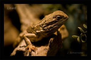 Lizard by Jna1985