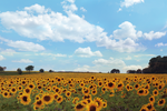 Sunflowers by Blanchii