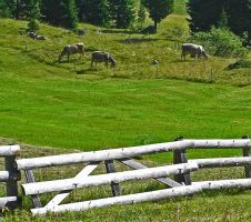 Fence by edelweiss26