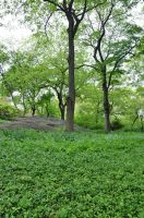 Central Park Stock 32 by FairieGoodMother
