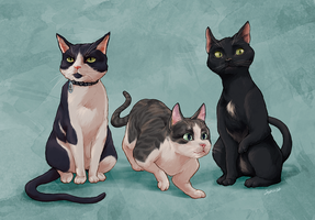 Commission: Cats by jeinu
