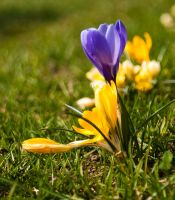Spring! by photo-exile