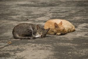 Lazy Ass Cats by TheBigTog