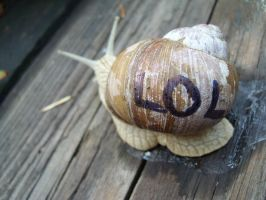 LOL, a snail by Grodden