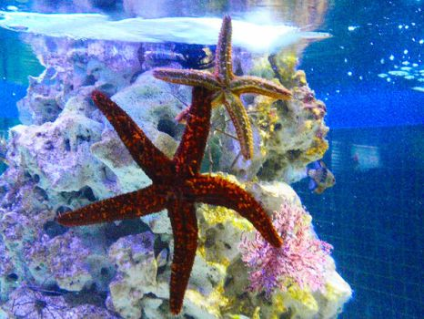 Starfishes by emy-hobbies