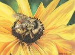 Bumble Bee by mkmars