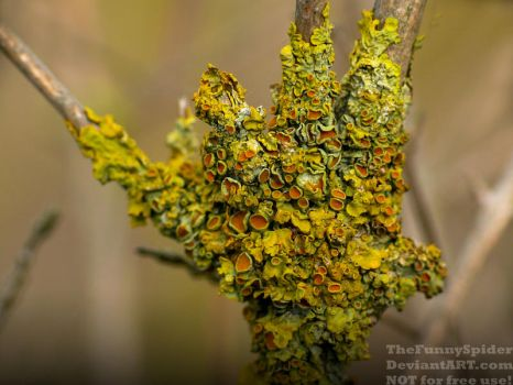 Yellow Lichen attacking a young tree by TheFunnySpider