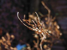 Waiting for Buds... by carbyville