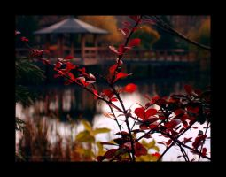 Japanese garden3 by Justynka