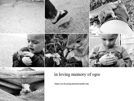 in loving memory by FigoTheCat