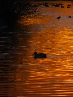 On Golden Pond by LughoftheLongArm