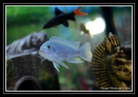fish 2 by DesignKReations