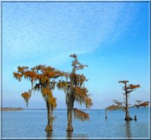 Cypress Beauty 2 by SalemCat